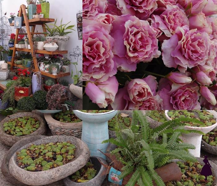 Bazar Ed Plantas